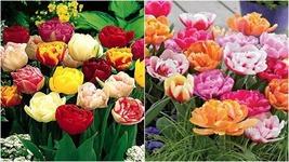 10ct Double Early Mixed Tulip Bulbs - $51.99