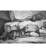 AESOP FABLES Wolf & Porcupine - 1811 Original Etching Print - $21.60
