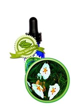 Labdanum (Rock Rose) Absolute Oil - 100% Pure (Cistus ladanif) -8oz (240ml) - $146.99