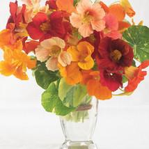 Alaska Mix Nasturtium Seed / Alaska Mix Nasturtium Flower Seeds - $21.00