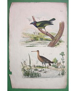 BIRDS Barbet Godwit !! H/C Color Antique Print - $7.27