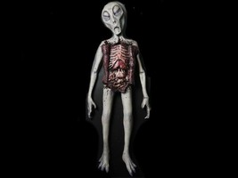 Alien Autopsy Realistic Prop Halloween Haunted House Decorations Distort... - $213.89
