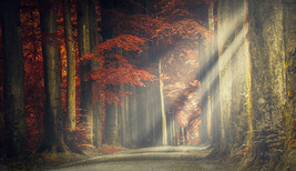 Trees Tree Forest Backdrop Wall Art Mural Photo Wall Paper Self Adhesive Vinyl 3 - $43.11+