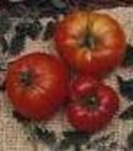 Tomato - Marglobe Supreme - Non-Hybrid - Non-GMO - St. Clare Heirloom Seeds - $2.25