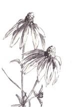 "Akimova: DAISY FLOWERS, ink, black&white, 4""x 6"" - $7.00"