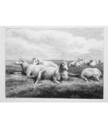 1801 ORIGINAL ETCHING Print by Howitt - Sheep Family Resting on Grassy M... - $25.20