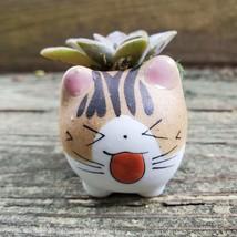 Cat Planter + Ghost Succulent, Kitten Ceramic Pot, Graptopetalum Paraguayense image 1