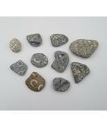 10 Crinoid Bryozoan Misc Fossils Specimens Wisconsin Lake Michigan Scien... - $19.79