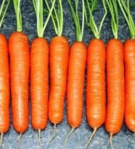 Scarlet Nantes Carrot 1500 seeds * NON GMO * ez grow * CombSH I21 - $11.98