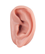3B Scientific SKINlike Realistic Acupuncture Ear Left Anatomical Model L - $21.79