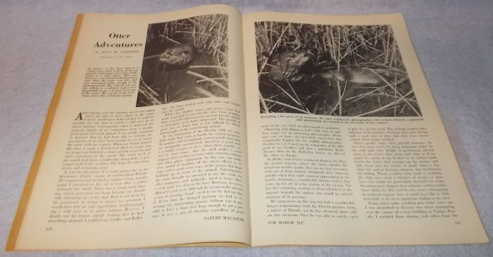 Vintage Nature Magazine March 1947 Charles Hexom Mountain Goats Cover