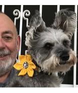 Dog Collar Bling Blossoms - £6.45 GBP