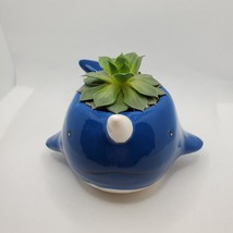 """Narwhal Whale Planter with live Succulent, 5"""" blue glazed ceramic animal pot image 5"""