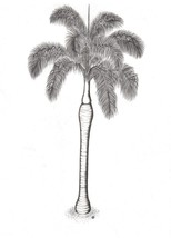 Royal Palm  Signed Print of a Pen and Ink Botanical Illustration (Free S... - $14.92