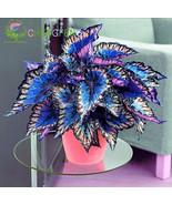 100Seeds Japanese Bonsai Coleus Foliage Plants Perfect Color Rainbow Dragon - ₹558.10 INR