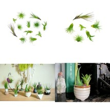 12 Air Plant Small Tillandsia Terrarium Kit Live Tillandsia Indoor Home ... - $26.13