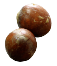 2 Organic Hass Avocado Seeds image 1