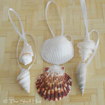 Seashell Christmas Ornaments Drilled Shell Natural Beach House Mermaid L... - $8.99