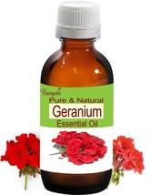 Geranium Pure Natural Undiluted Essential Oil 50 ml Pelargonium odoranti... - $50.88