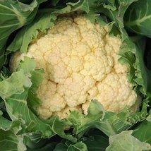 1/4 Gram Organic Seeds of Olympic Cauliflower Organic - $23.27