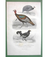 BIRDS Guinea Fowl Wild Turkey Black Cock - 1860s COLOR Print by Buffon - $14.92