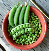 SHIP From US, 25 Seeds Cascadia Snap Pea Seeds, DIY Healthy Vegetable AM - $21.99