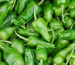 10pcs Famous Spanish Heirloom Padron Pepper Yummy Edible IMA1 - $13.97