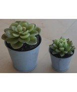 Set of Two Decorative Succulent Cactus Candles - NEVER BURNED - IN TIN P... - $19.79