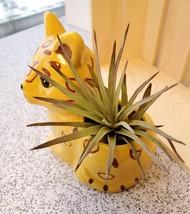 """Air Plant in Jaguar Animal Planter, 4"""" yellow ceramic, Live Airplant, Jay Jaguar image 2"""
