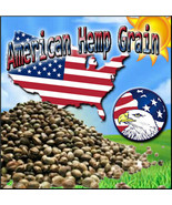 Quarter Pound of American Hemp Grain Seeds - $9.99