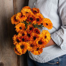 Orange Button Calendula Seed /  Calendula Flower Seeds - $12.00