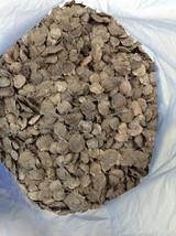 100  Pterocarpus santalinus  Seeds ,Red Sandalwood  seeds - $15.00