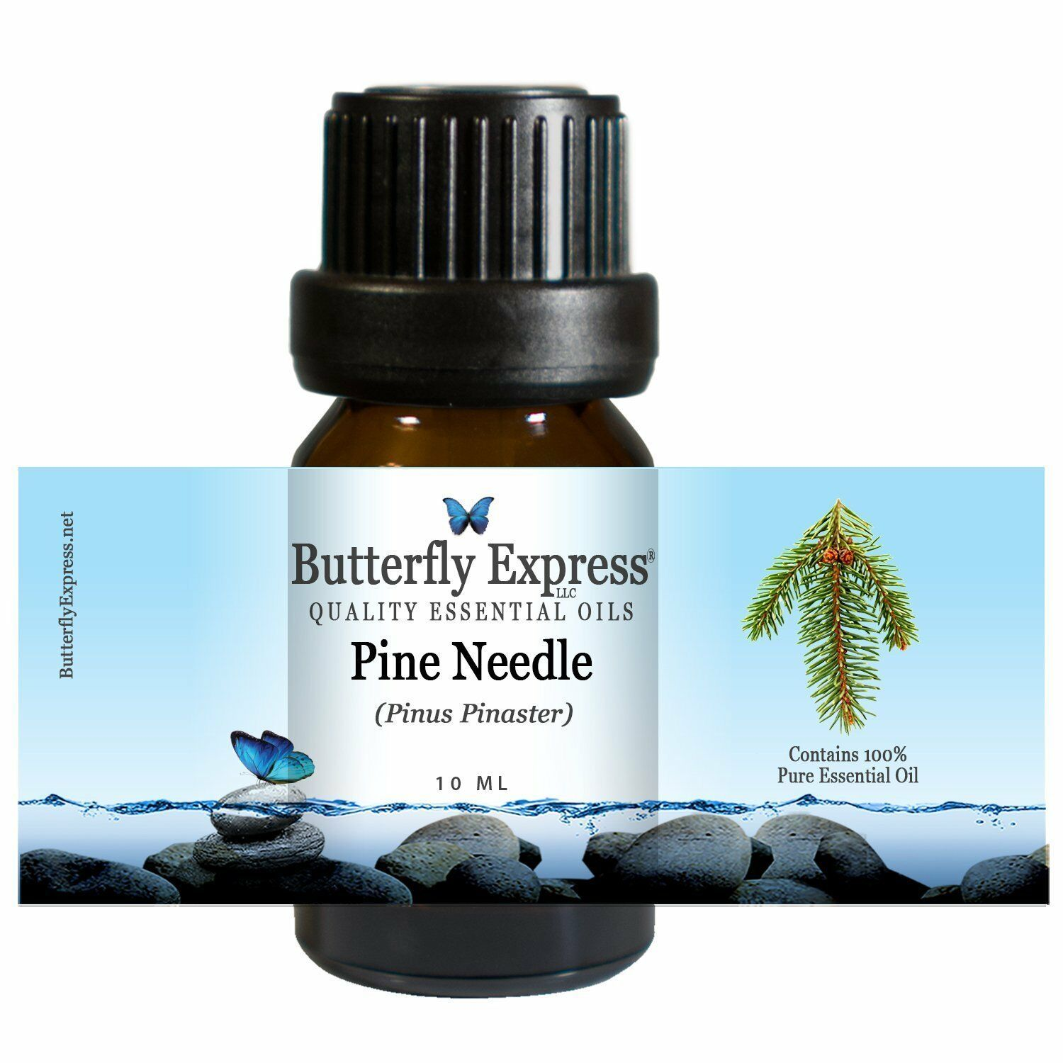 Pine Needle Essential Oil 100% Pure Butterfly Express circulation sore joints