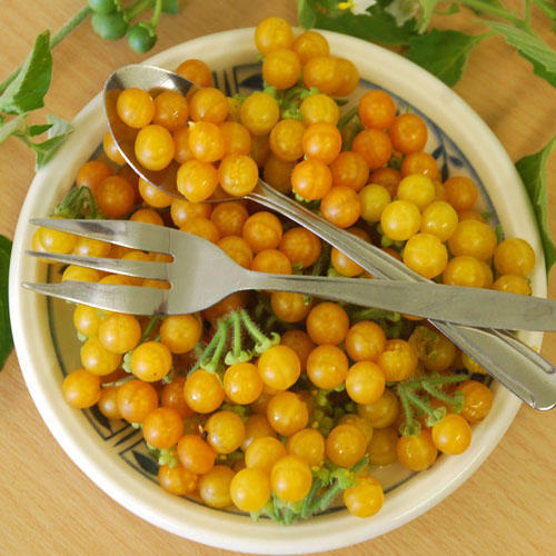 Primary image for Golden Pearl Solanum Willosum Small Edible Fruit Shrub' 20+ Annual Seeds