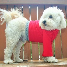 Dog Shirt, dog pants, dog wounds, dog surgery, dog cone, keep clean, hot... - $36.00+
