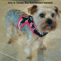 Tampa Bay Buccaneers dog harness. Fun,  bright easy harness for walking,... - $24.00+