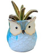 Thumb Flower Pots Plant Pot Flower Pot Mini Flower Pots - €14,79 EUR