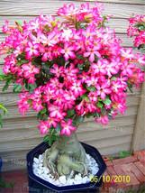 4 pcs Flower Bonsai floresling Air Purification for Home Garden - $2.50