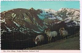Colorado Postcard Big Horn Sheep Rocky Mountain National Park Forest Canyon - $2.26