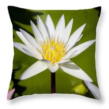 White Lotus Flower, Throw Pillow, fine art, home decor, accent pillow - $41.99+