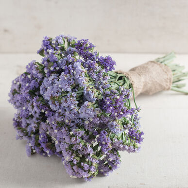 Primary image for Seeker Pastel Blue Statice Seed,Statice Flower Seeds