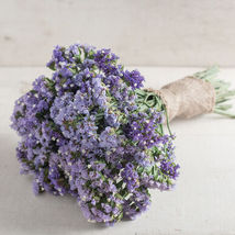 Seeker Pastel Blue Statice Seed,Statice Flower Seeds - $21.00