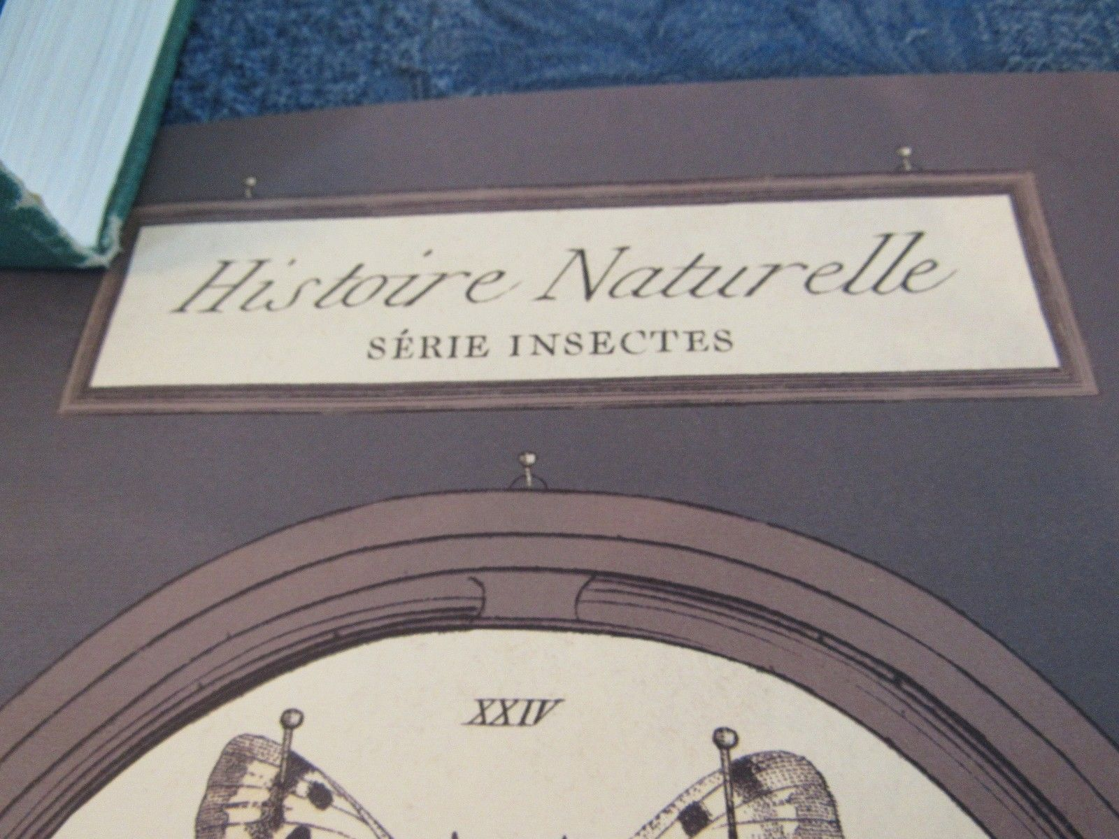 19th C Insect Plate- Histoire Naturelle Serie Insectes Reproduction Poster