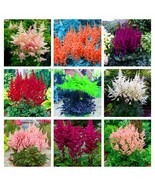100Pcs Mix Color Astilbe Plant Exotic Beautiful Potted Flower Flores Seeds - $8.82