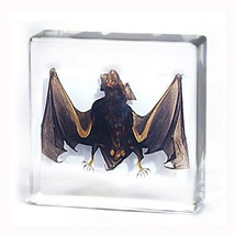 Desk Display Real Eastern Asia Bat encased in lucite block visible 2 sid... - $34.50
