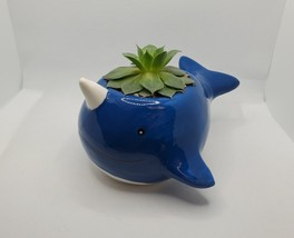 """Narwhal Whale Planter with live Succulent, 5"""" blue glazed ceramic animal pot image 2"""