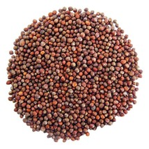 Broccoli Seeds, 30 gram (about 1000 seeds), Organic, Non-GMO image 2