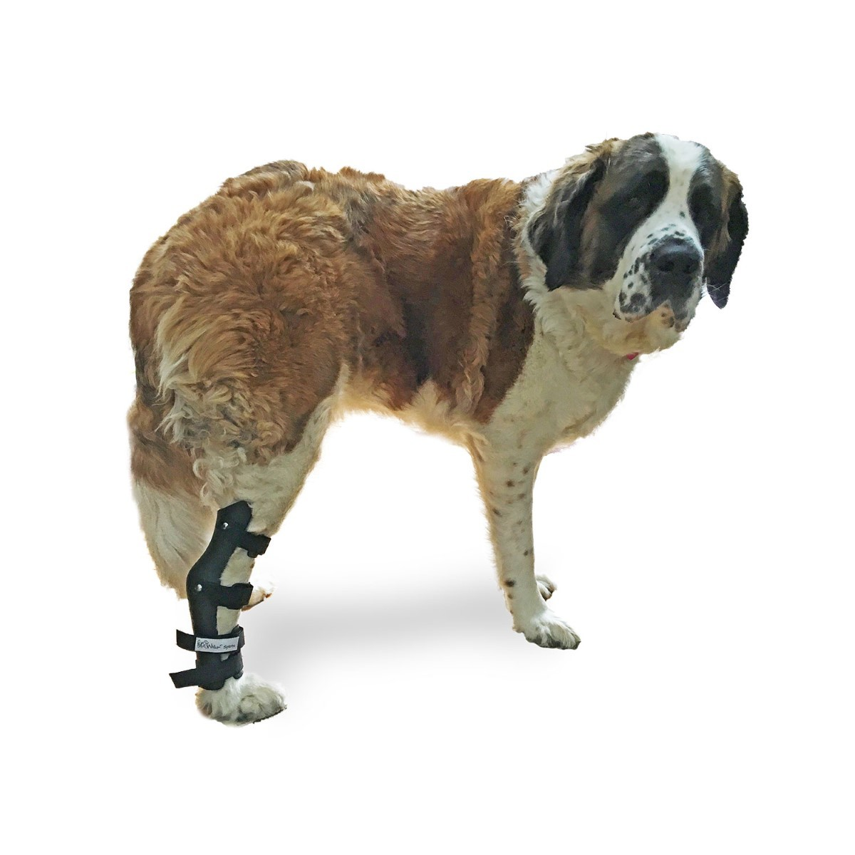 Primary image for Pet Splint for Dogs | Hock Style Foot Splint For Dogs with Arthritis and Injurie