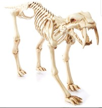 Animated 3ft Sabertooth Tiger Skeleton Halloween Prop - €82,41 EUR