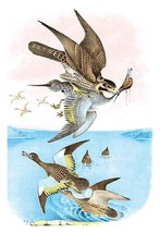 The Wandering Falcon (Great-Footed Hawk) by Theodore Jasper - Art Print - $19.99+